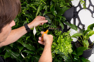 Green4Air vertical green wall garden kit. Buy wall garden.
