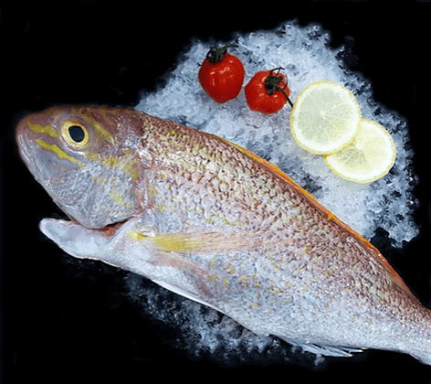 Sea Bream 红哥里 Whole (800G-1KG) - Catch Of The Day Singapore