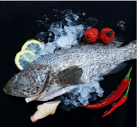 Stone Grouper 石斑 Whole (700-800G) - Catch Of The Day Singapore