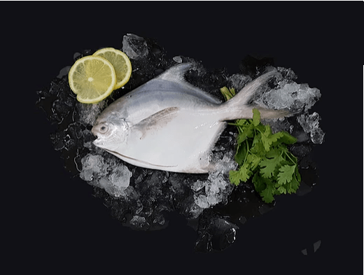 White Pomfret 白鲳 Whole (200-300G) - Catch Of The Day Singapore