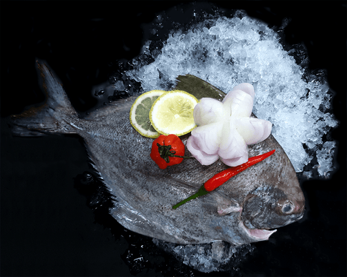 Black Pomfret 黑鲳 (400-500G) - Catch Of The Day Singapore