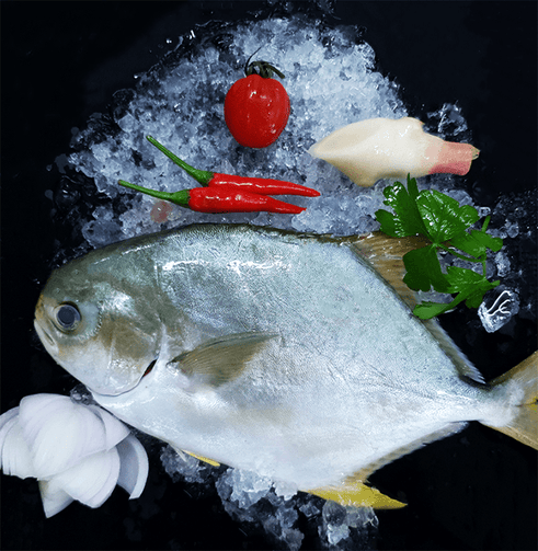 Farmed Golden Pomfret 金鲳 Whole (500-600G) - Catch Of The Day Singapore