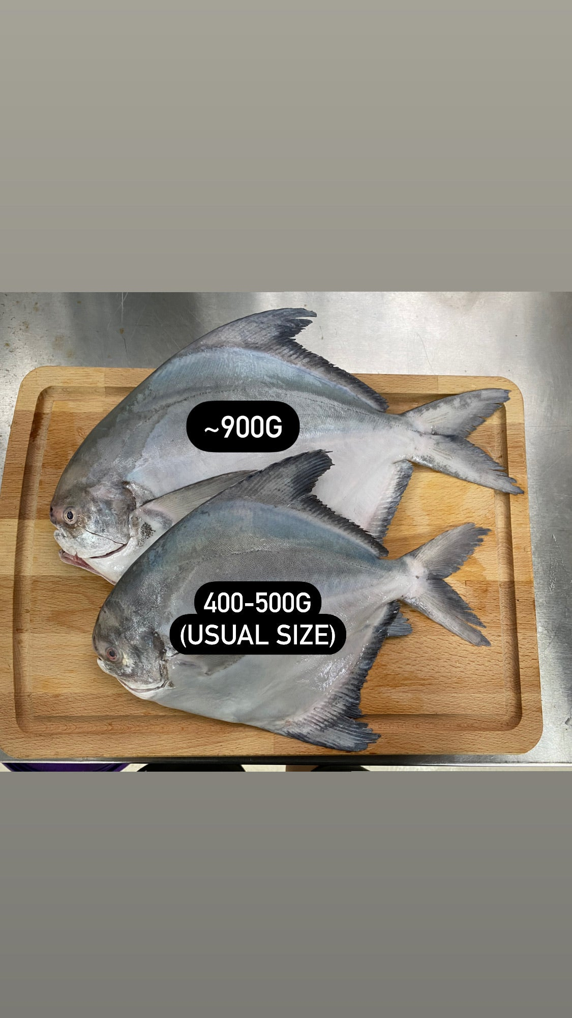 *LARGE* Chinese Pomfret (~900G)