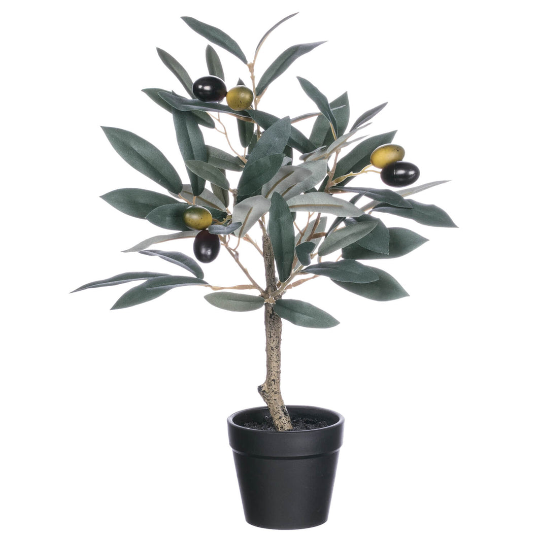 POTTED OLIVE TREE - T E R R A