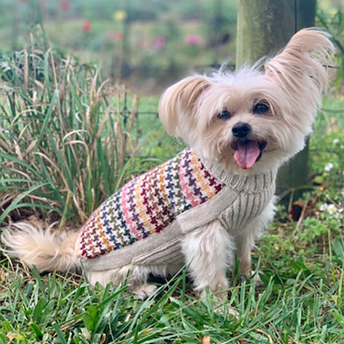 Load image into Gallery viewer, Artesana Dog Sweater