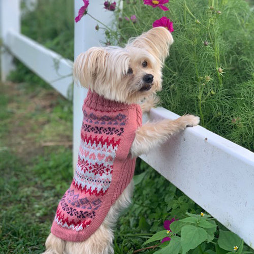 Fall Medley Dog Sweater in Pink