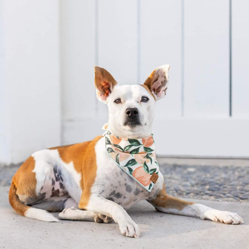 Peaches and Cream Dog Bandana