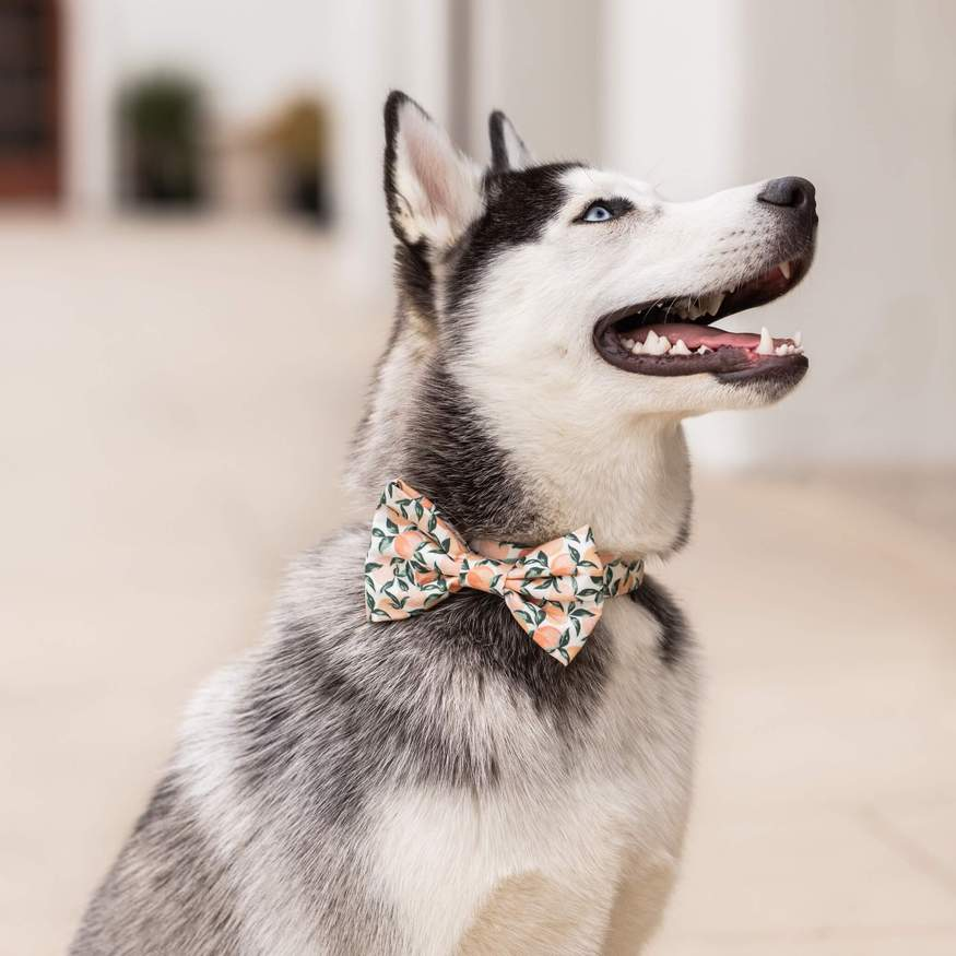 Peaches and Cream Dog Bow Tie Attachment