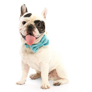 Velvet Dog Bow Tie Attachment in Robins Egg Blue