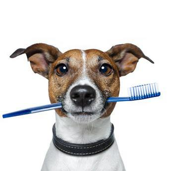 Dental Care for Your Furry Friends!