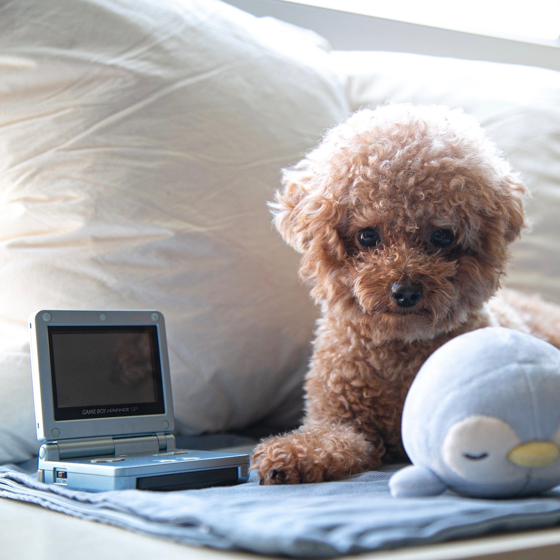 Dog with computer and stuffed seal