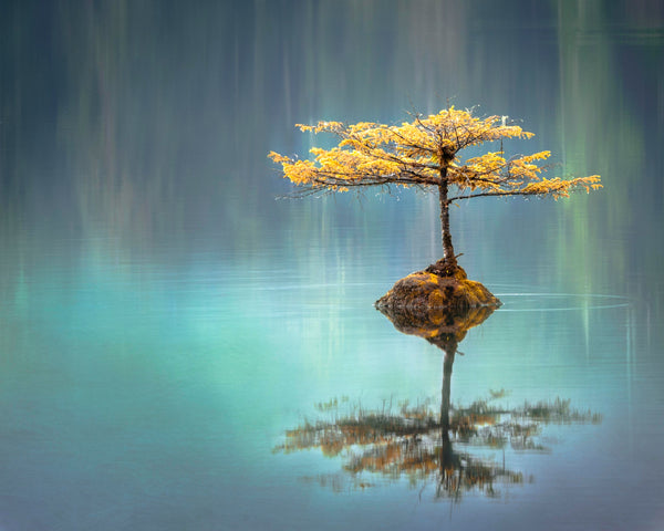 Lonely tree surrounded by clear blue water