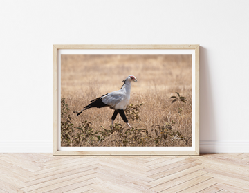 DT036 - Secretary Bird