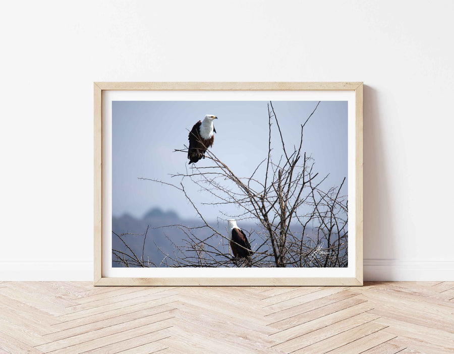DT051 - Pair of Fish Eagles