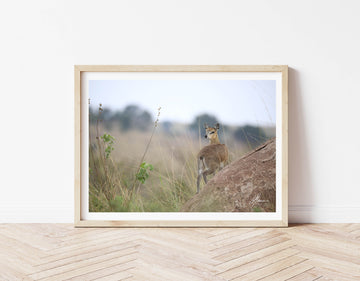 DT044 - Cute Deer on the Serengeti