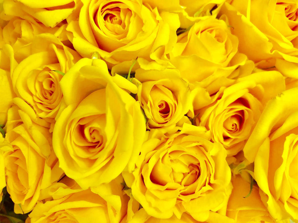 a lot of yellow roses