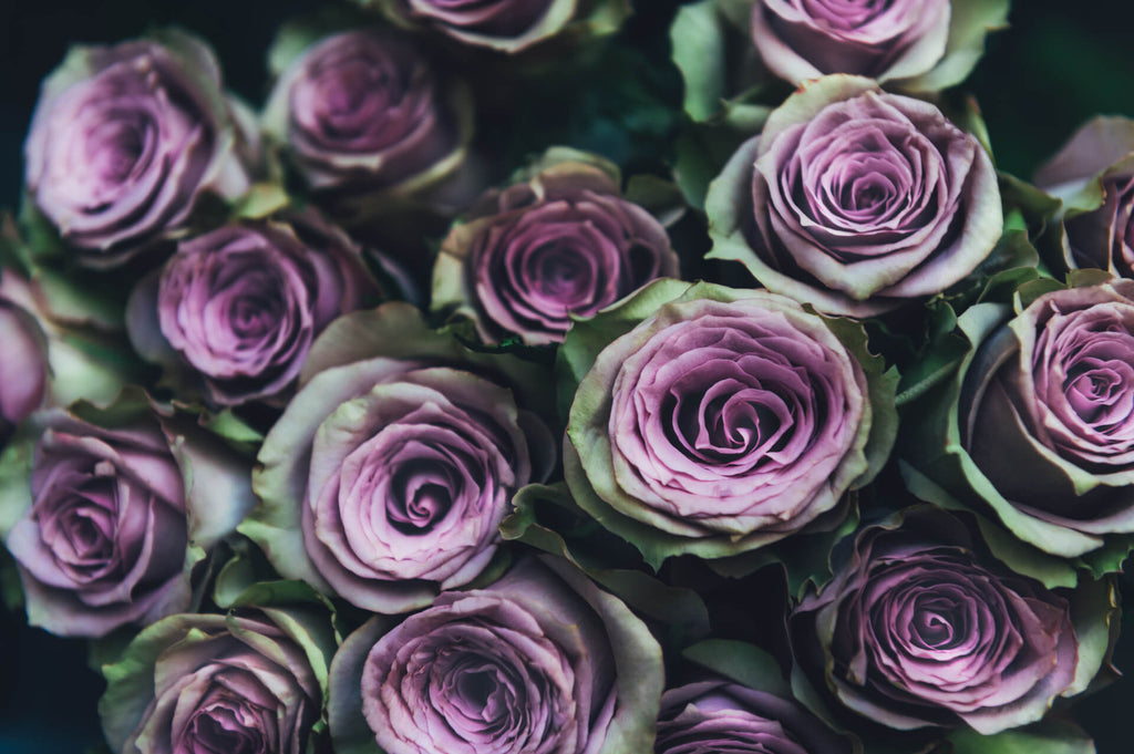 a lot of purple roses