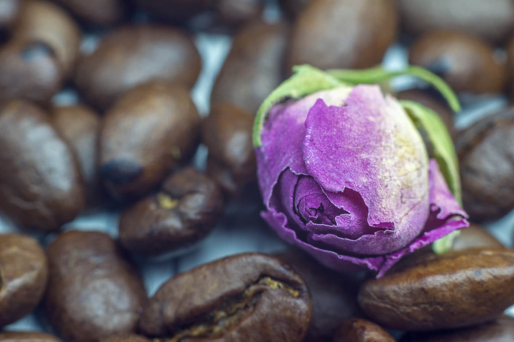 a closed purple rose with coffee beans