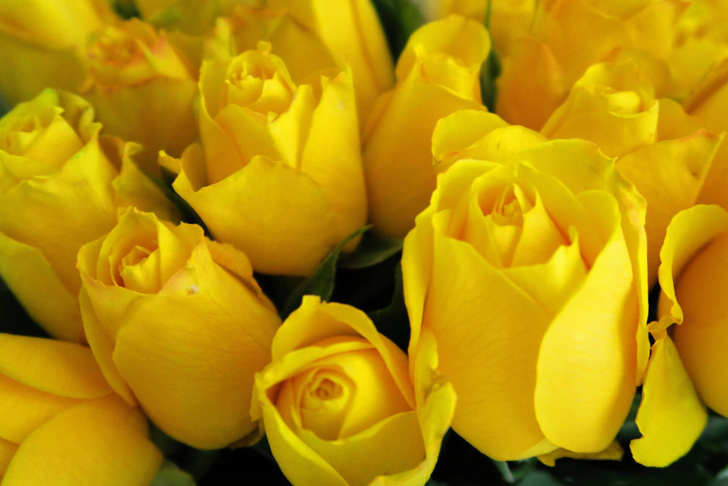 close view of yellow roses