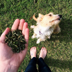 peppermint for dogs