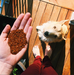 rooibos for dogs