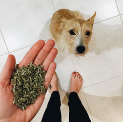 sage for dogs
