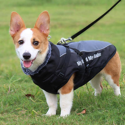 Winter Warming Bomber Jacket for Dog Sumait