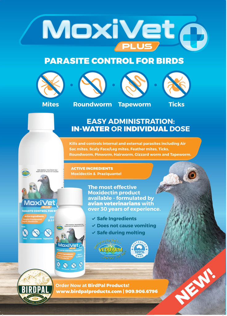 Moxivet Plus for pigeons, finches, and canaries, Contains Moxidectin and Praziquantel.