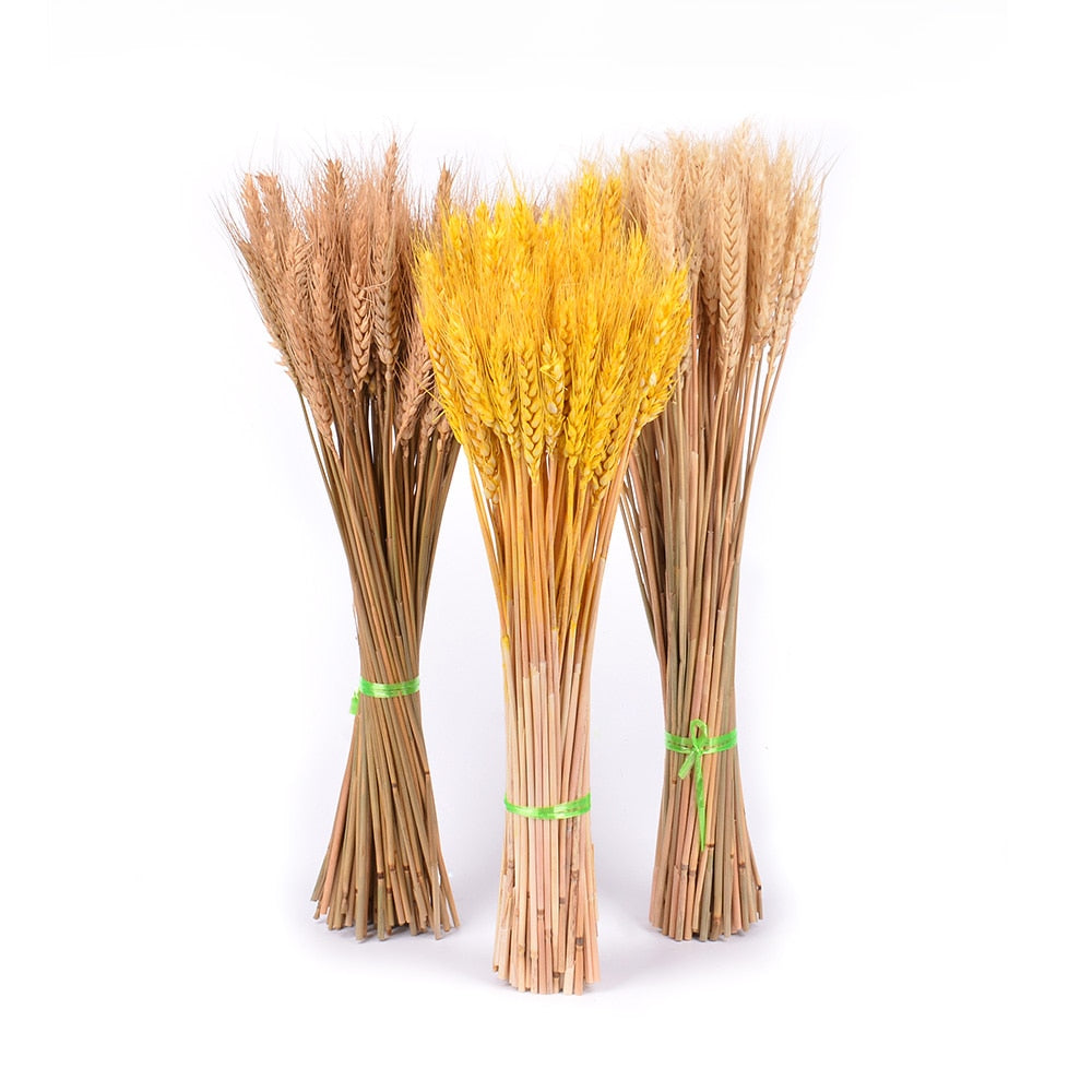 50Pcs Real Wheat Natural Dried Flowers Wedding Party Decoration Craft Scrapbook Diy Home Decoration Wheat Bouquet Photo Props