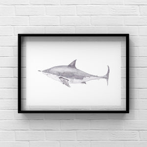 "Art Print ""Touch da Fishy"" in Aid of Sea Shepherd - tinkl ILLUSTRATION"