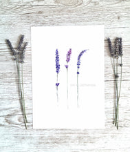 "Load image into Gallery viewer, Floral Art Print ""Lavender Love"" - tinkl ILLUSTRATION"