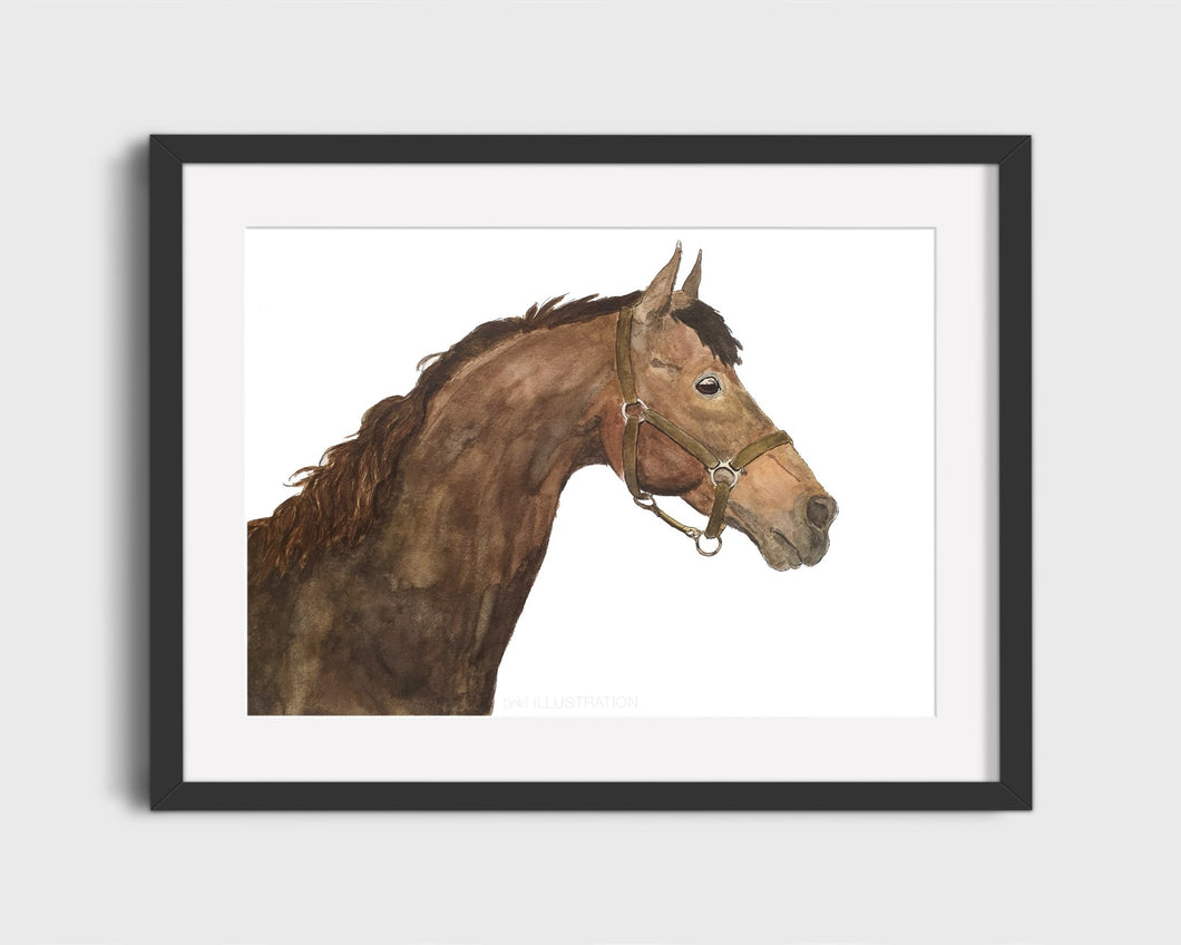 Watercolour Horse Portrait - tinkl ILLUSTRATION