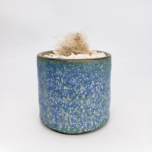 Ocean Spray Planter