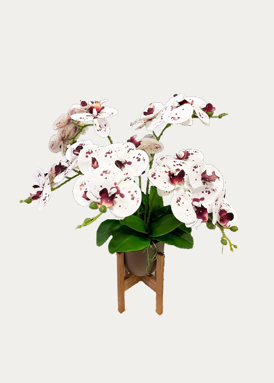 6-Stalk Phalaenopsis Arrangement with Brown Pot