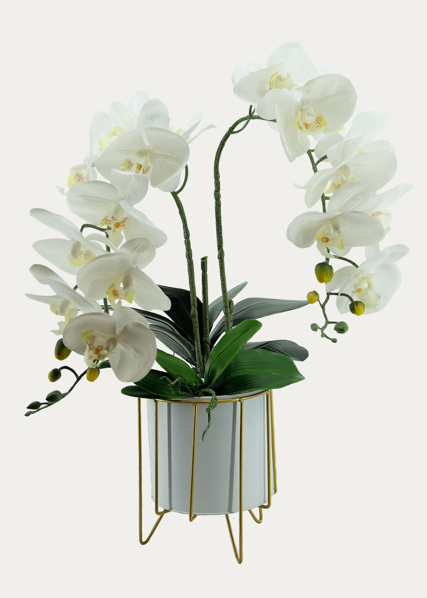 Double-Stalk Phalaenopsis Arrangement with Gold Frame Pot