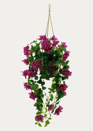 Open image in slideshow, Hanging Bougainvillea