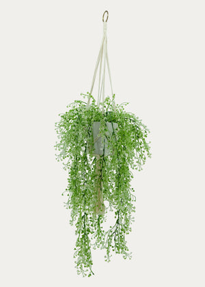 Open image in slideshow, Hanging Bell Bush with Macramé Holder