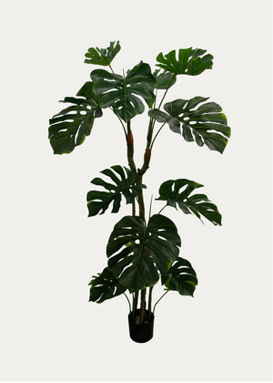 Open image in slideshow, Monstera Tree