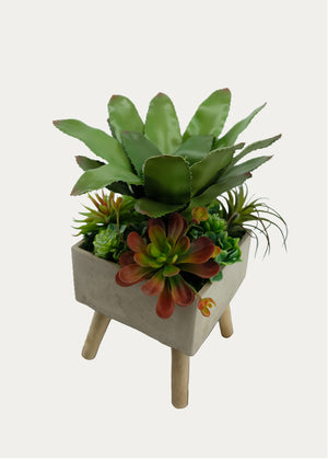 Open image in slideshow, Assorted Succulent Arrangement with Aeonium