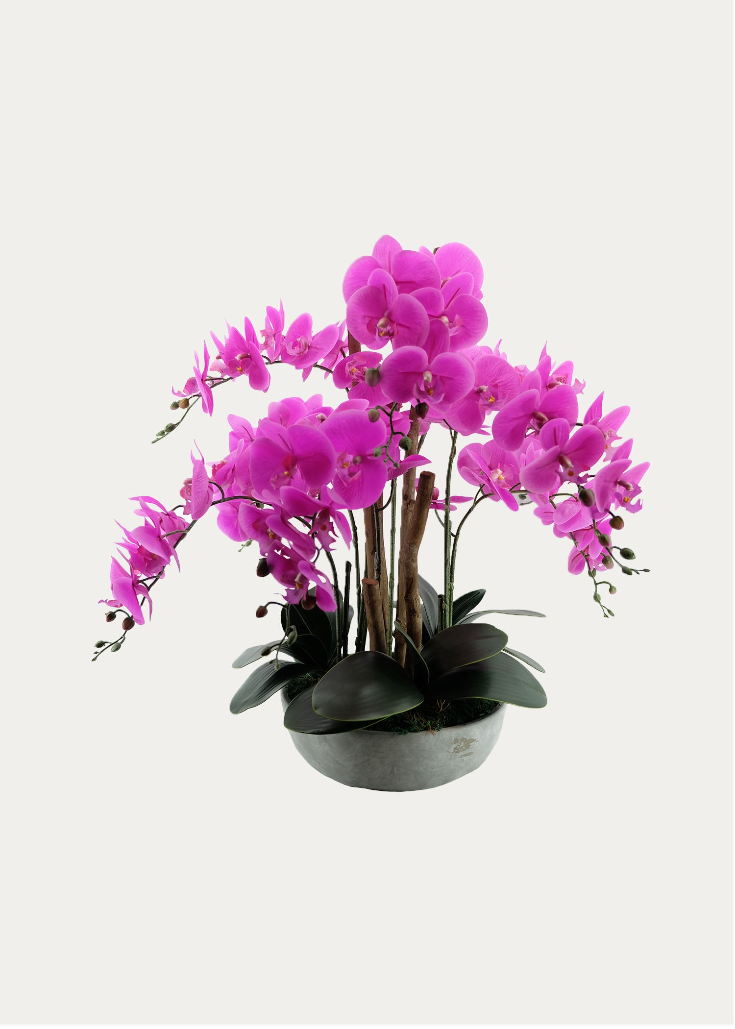 Eight-Stalk Phalaenopsis Arrangement with Cement Pot