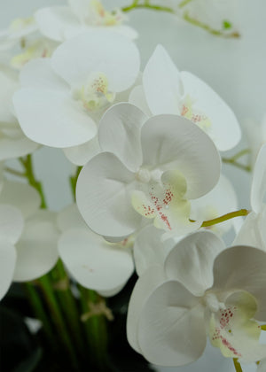 Open image in slideshow, Eight-Stalk Phalaenopsis Arrangement with Cement Pot