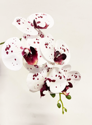 Open image in slideshow, 6-Stalk Phalaenopsis Arrangement with Brown Pot