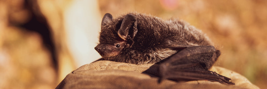 Bat Appreciation Day 2021