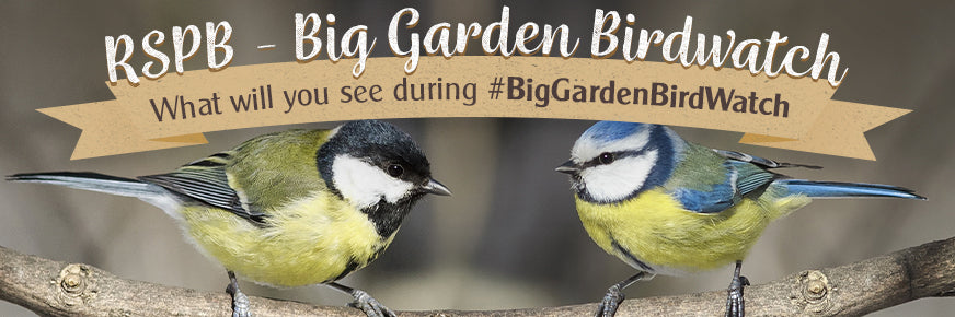 Big Garden Birdwatch 2021