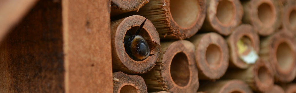 Solitary Bee Care