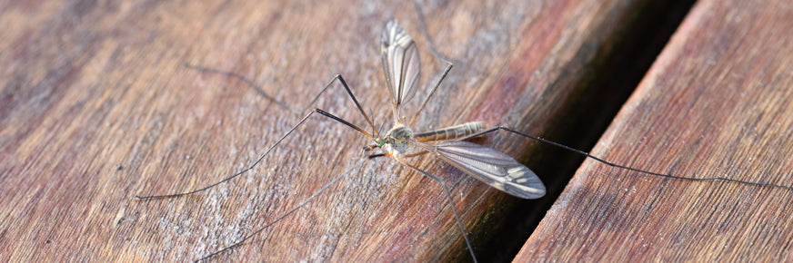 Mosquito on boards