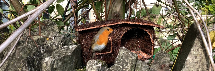 Wildlife World Cabin Nester on wall with Robin
