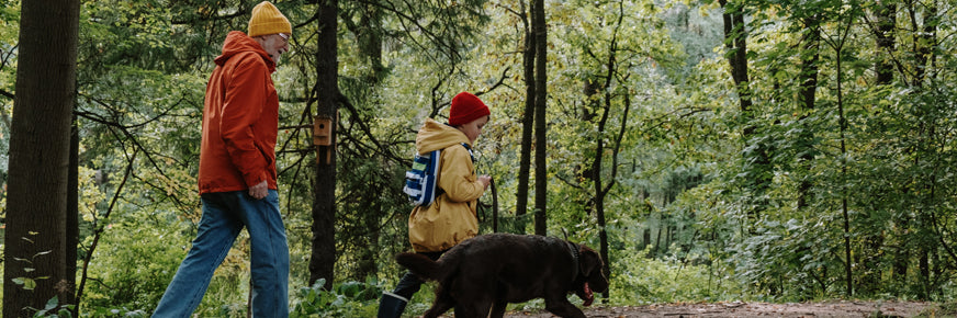 People and dog Walking in the Trees