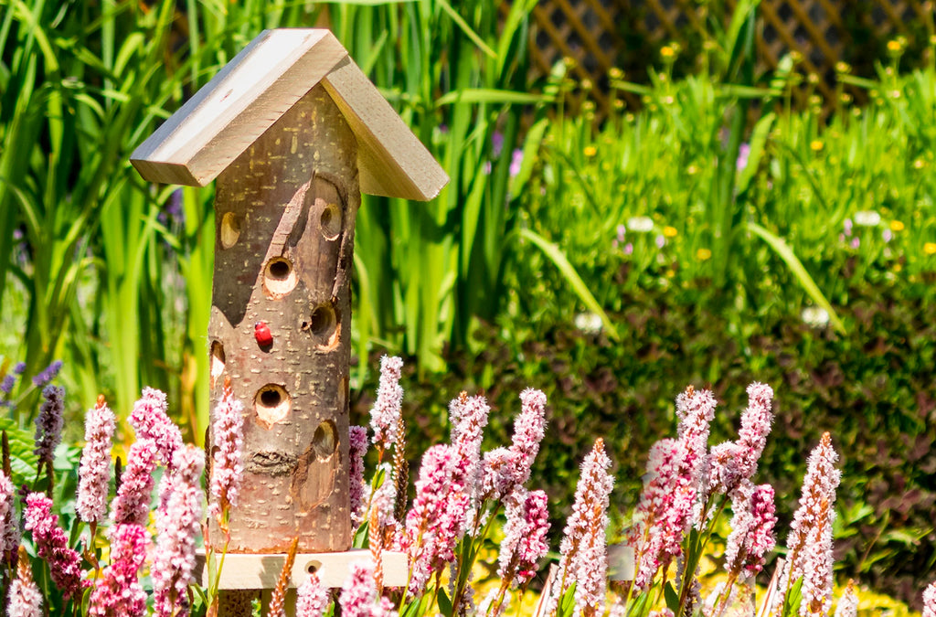 Buy Insect Hotels Online