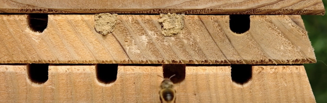 Wildlife World Solitarily Bee Hive
